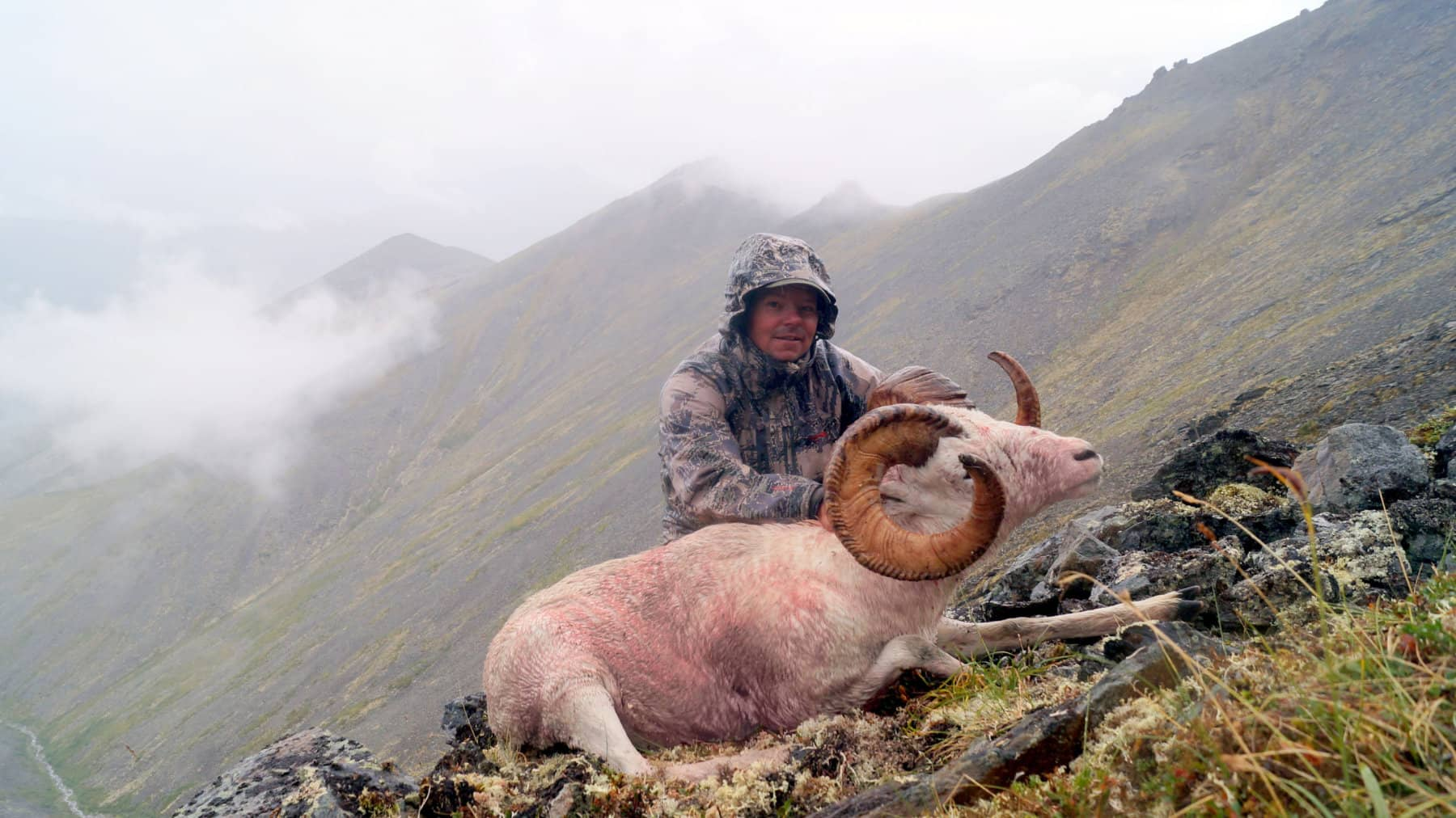 Alaska Dall Sheep Brooks Range Hunts