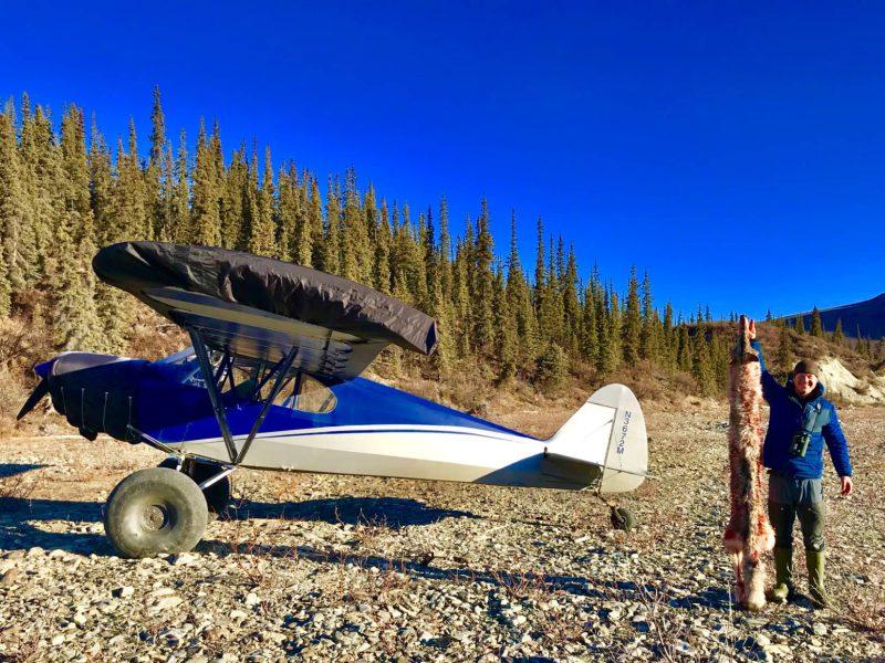 Alaska Wolf Hunts