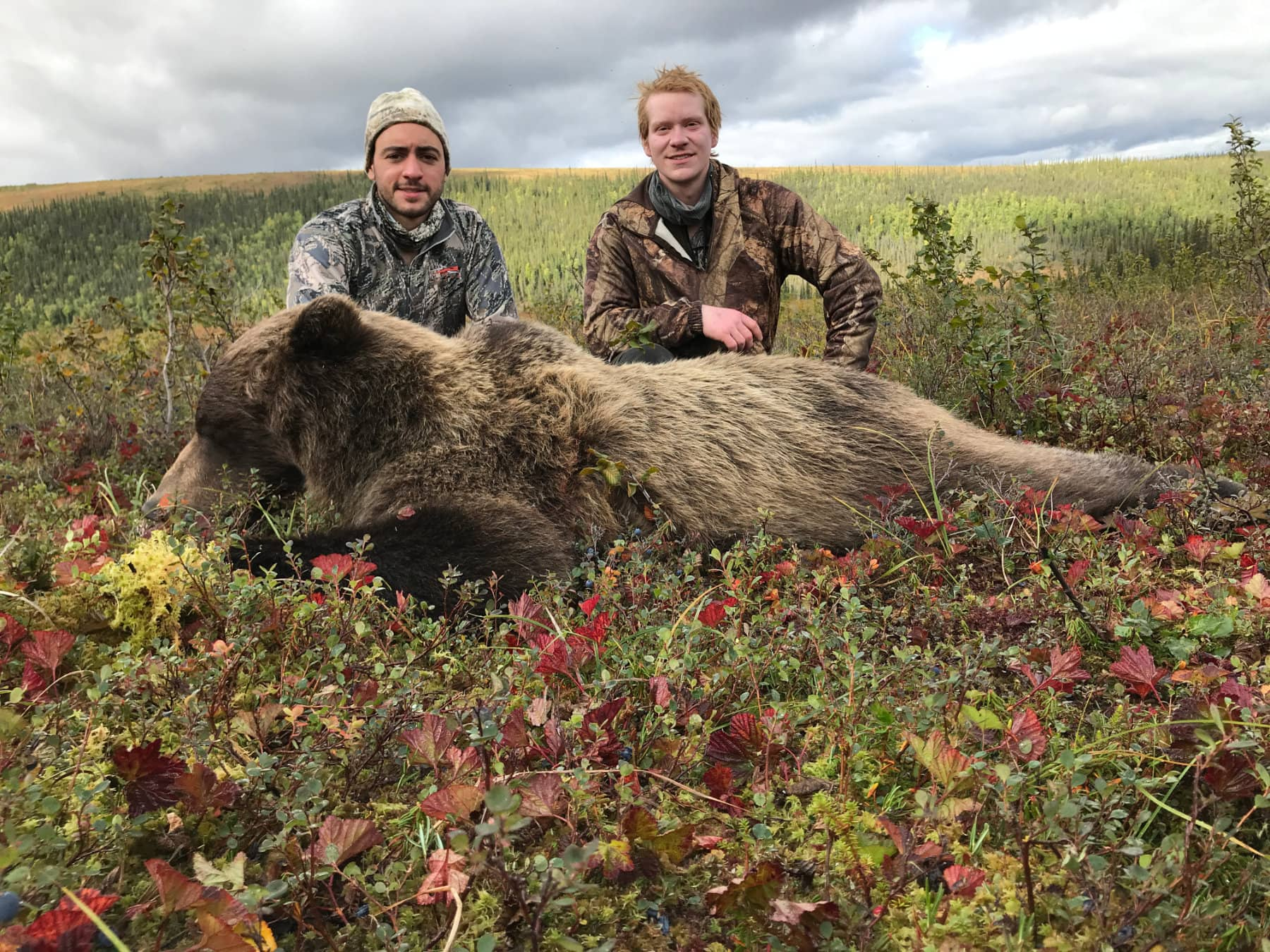 Guided Bear Hunts Alaska