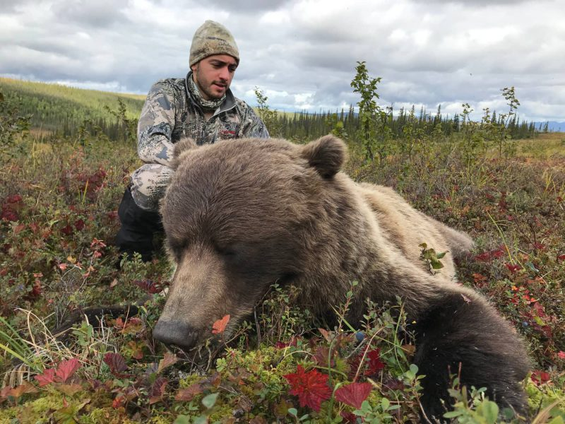 Guided Brooks Range Bear Hunt