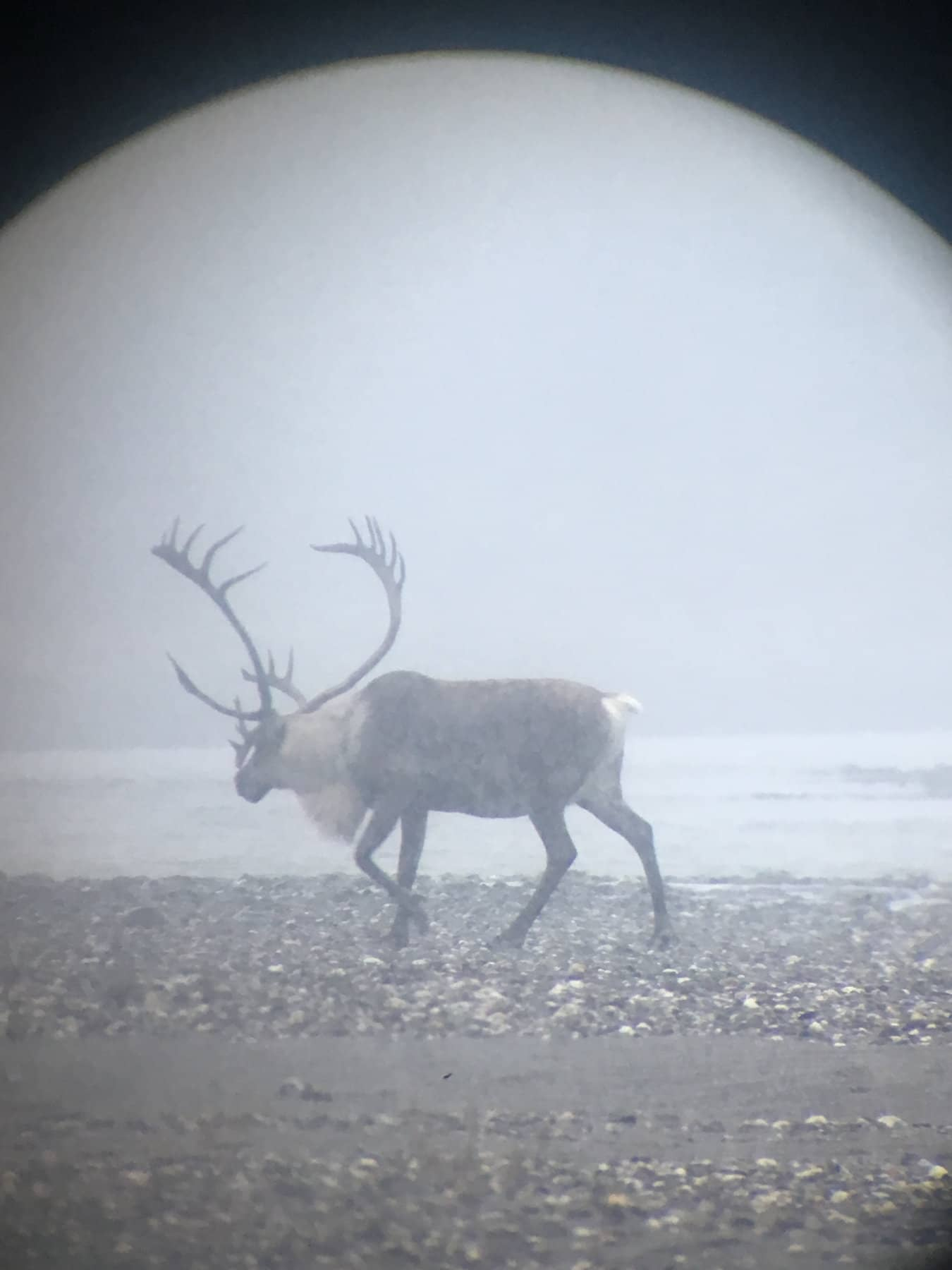 Spotting Caribou on the Hunt